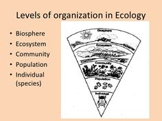 Levels of organization in ecology