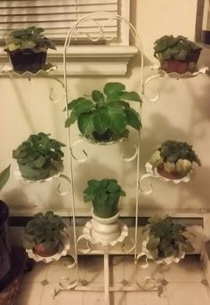 """My """"new"""" iron plant stand, for my violets. Love it!"""