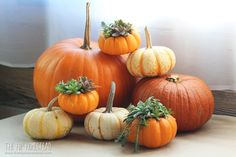 These Mini Succulent Pumpkin Planters are such a fun and easy craft idea, they would be such a unique addition to your fall table setting. Growing Herbs, Growing Vegetables, Pumpkin Planter, Fall Table Settings, Propagating Succulents, Hanging Succulents, Organic Living, Natural Living, Backyard Farming