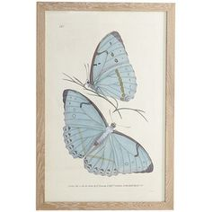 Butterfly Kisses Wall Art