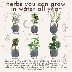 Herb Garden, Indoor Garden, Indoor Plants, Hanging Plants, Magic Herbs, Herbal Magic, Witch Herbs, Green Witchcraft, Healing Herbs