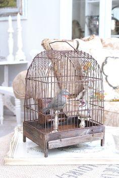 Common Ground....... Vintage bird cage