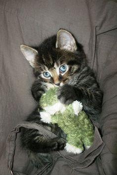 Un gat@ intrépido aventurero sin miedo, le das lo mejor de ti y te recompensa con su fiel amistad y ronroneo.