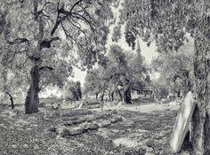 hacı memiş pano - hacimemis muslim cemetery & mosque