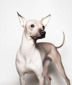 great pet photography project!!!! http://www.thepetproject.pt/albums/pet-white/