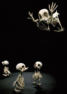 Cartoon Skeletons by Hyungkoo Lee/Donald Duck