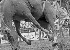 Shut Down Abusive Rodeo