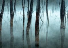 30 National Geographic Contest Photos That Show The Beauty of Our Planet