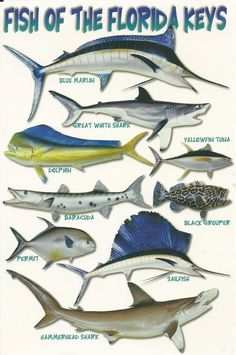 Names of fish to eat do you like to eat different types for Types of saltwater fish to eat