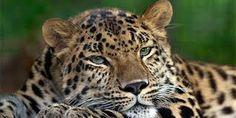 Resultado de imagem para animais em extinção