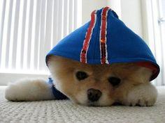 Il cane di Facebook che è diventato un fenomeno in rete
