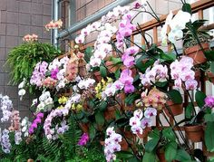 Hang clay pots of orchids with hangapot, the hidden flower pot hanger to create a living wall. Add some ferns and bromeliads for added color in texture in your design