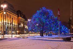 """Elgin Street, Christmas Lights"" by Nikon_Mario"