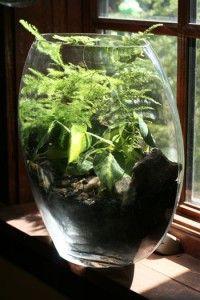 low light terrarium with pothos brasil