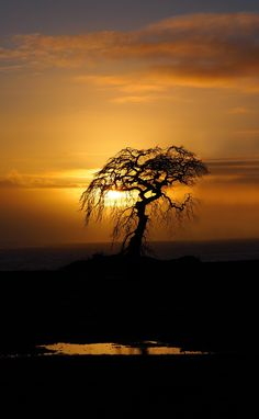 The lonely tree by Jone Torkelsen on 500px