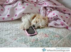Puppy fell asleep while texting.