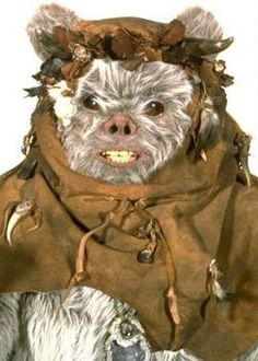Chirpa was a male Ewok who served as the head of his tribe's Council of Elders in the Bright Tree Village on the forest moon of Endor. The gray-furred Chirpa carried a reptilian staff denoting his rank which carried the teeth and horns of animals he had hunted. He and his wife Ra-Lee had two daughters: Asha and Kneesaa a Jari Kintaka. Chirpa was also the brother of Bozzie and the uncle of Paploo.