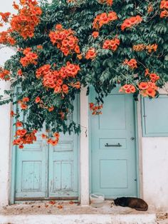 A picture perfect paradise. That's how most people would describe Mykonos. But is Mykonos worth visiting or should you skip it all together. Orange Aesthetic, Nature Aesthetic, Flower Aesthetic, Summer Aesthetic, Travel Aesthetic, Aesthetic Photo, Aesthetic Pictures, Bedroom Wall Collage, Photo Wall Collage