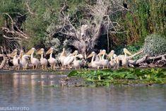 20689537_1464211520334077_4521274436517491778_o Danube Delta, Boat Tours, Bird Watching, Landscape, Animals, Scenery, Animales, Animaux, Animal