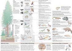 Infographics Documental