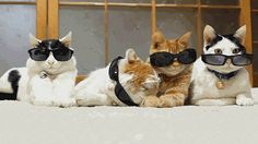 Cats in sunglasses... just hanging out.