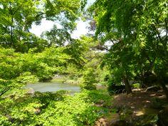 """""""Nijinosato"""" (Giardino), Shuzenji Shizuoka Japan (Giugno)"""