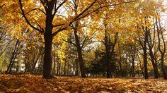 autumn park pyatigorsk wallpapers