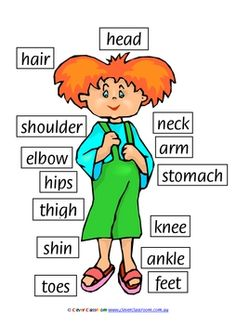 FREE - My Body Poster - PDF fileAnother free resource from Clever page, printable resource. English Class, English Lessons, Teaching English, Learn English, Teaching Materials, Teaching Tools, Teaching Kids, Body Preschool, Preschool Classroom