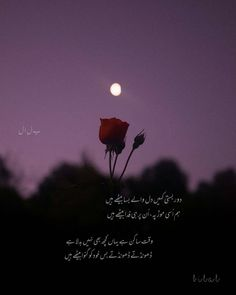 Urdu Quotes, Urdu Poetry, Movie Posters, Film Poster, Billboard, Film Posters