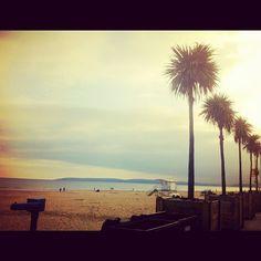 Bournemouth Beach - Palm Trees