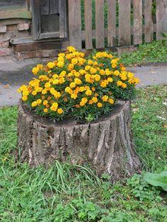 19 Blazing Tree Stump Planter Ideas that'll Impress You | Balcony Garden Web