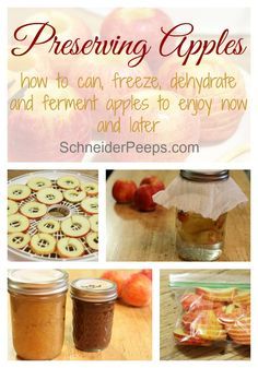 Preserving apples is a great way to have treats all year long. We like to…: