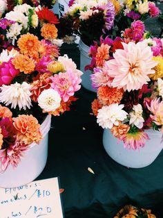 Ein buntes Dahlien und Chrysanthemenmeer #tollwasblumenmachen