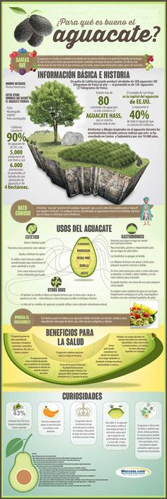 Avocados Health Benefits – An Avocado A Day! Avocado Uses and Health Benefits Avocado Superfood, Superfoods, Health And Nutrition, Health And Wellness, Nutrition Guide, Wellness Foods, Holistic Nutrition, Health Diet, Health Fitness