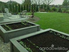 Warzywniki w skrzyniach, pojemnikach - strona 40 - Forum ogrodnicze - Ogrodowisko