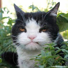 Pokey  Tardar Sauces(grumpy cat) brother