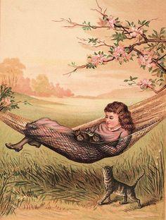 hammock full of kittens