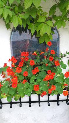 Blomkarse.