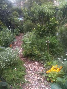 Example of a recently planted food forest.