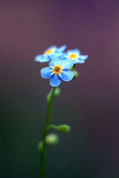 Wildflower I saw in Scotland