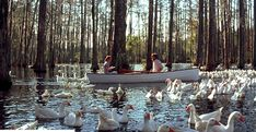 "Ryan Gosling would never then try to woo you again with a magical swan canoe ride. Like, this can't even exist. | 49 Reasons Why ""The Notebook"" Is The Worst, Most Frustrating Movie Ever Created"