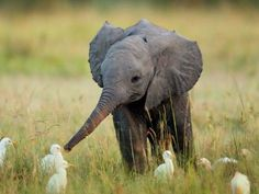 so sweet baby elephant and baby chickies