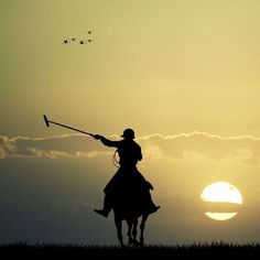 www.horsealot.com, the equestrian social network for riders & horse lovers | Polo by night.