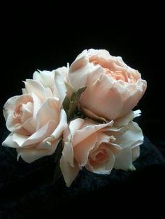 Sugar roses.