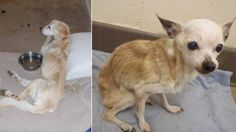 Dogs DIE, found severely emaciated at California property! Demand justice now! | YouSignAnimals.org