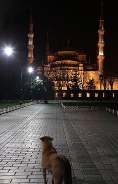 Sultanahmet'te akşam ve ezanı dinleyen bir köpek 08/03/2018 #istanbul