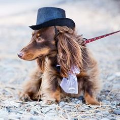 """You can count on this cowboy!"" 