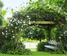 "Pink 'Albertine' roses tumble over an arbour at the entrance to the lake walk in this [picturesque country garden](http://www.homestolove.com.au/gallery-jennys-picturesque-country-garden-1658|target=""_blank""). *Photo: Claire Takacs*"