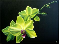 Yellow Orchids oil paintings by Anna Keay Fine Art Maui Hawaiian tropical flowers