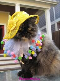 Reminds me of Steel Magnolias! Weezer Cat!